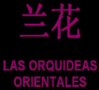 Orquidea Orientales, Sexclubs, Comunidad Valenciana